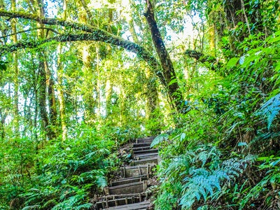 landscape-photo-of-stair-in-the-forest-904789