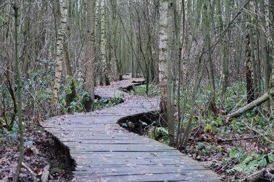 path-215325_640