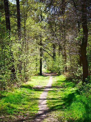 path-5044332_640