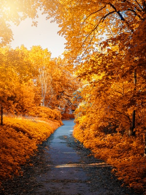 photo-of-path-in-between-woods-during-autumn-1477199 (1)